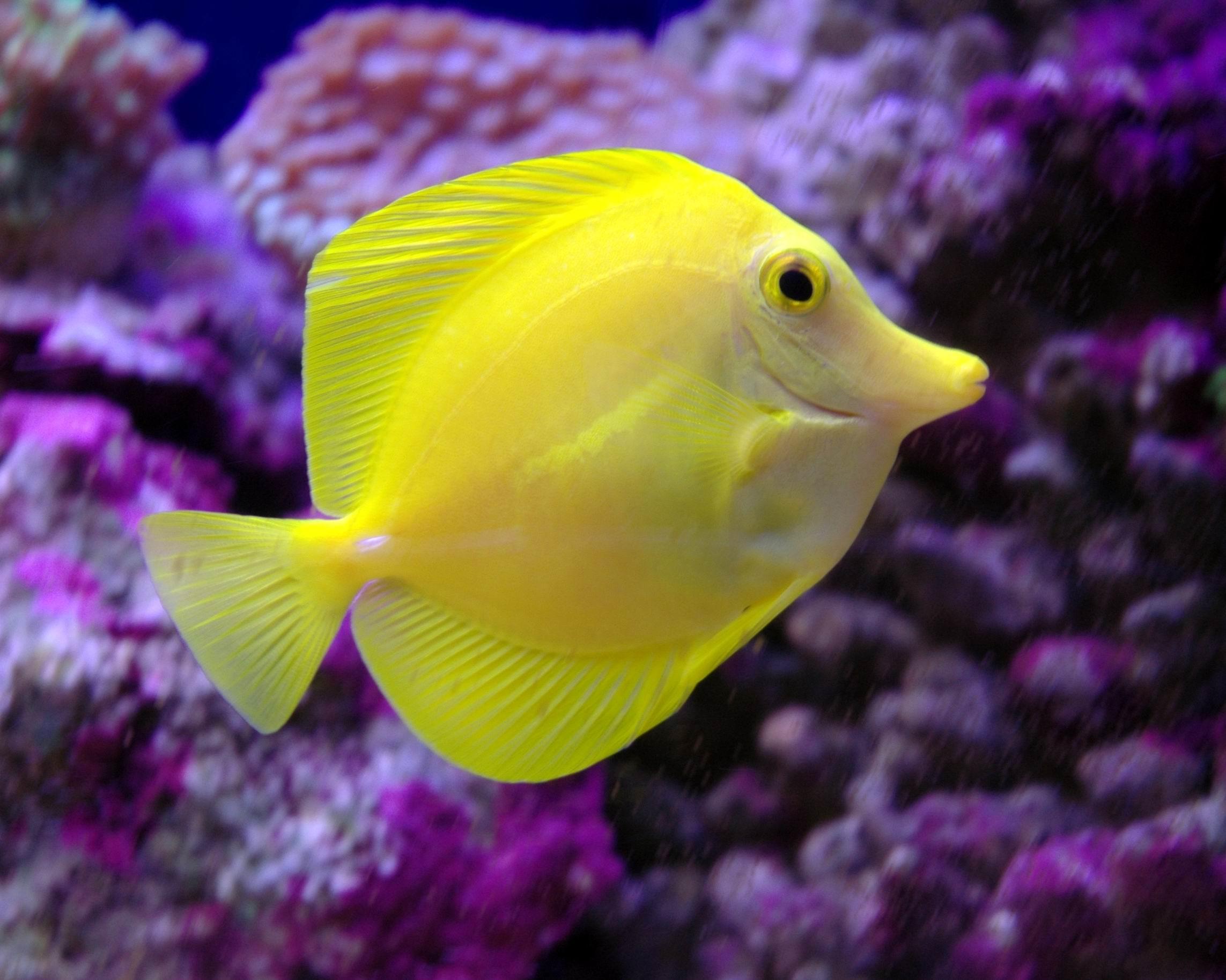Aquarium fishes  Fish