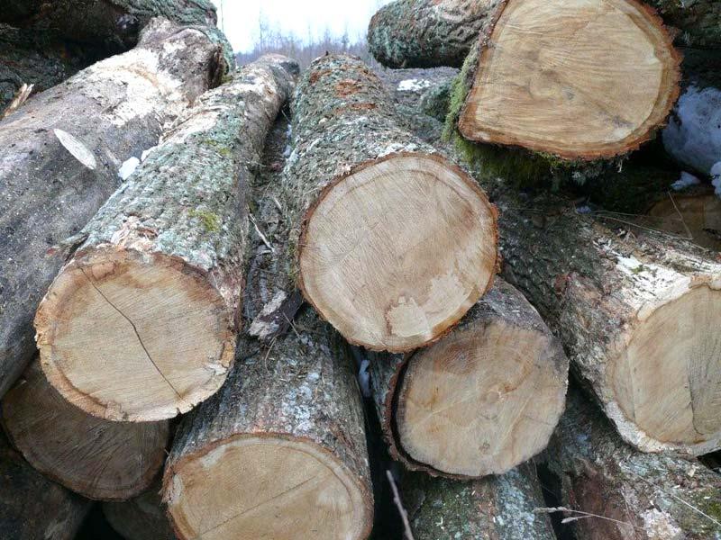 Oak Wood Logs ~ Products white oak wood logs manufacturer