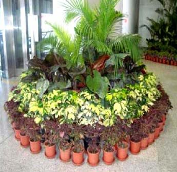 Indoor plants maintenance services in delhi offered by bhu for Indoor plant maintenance