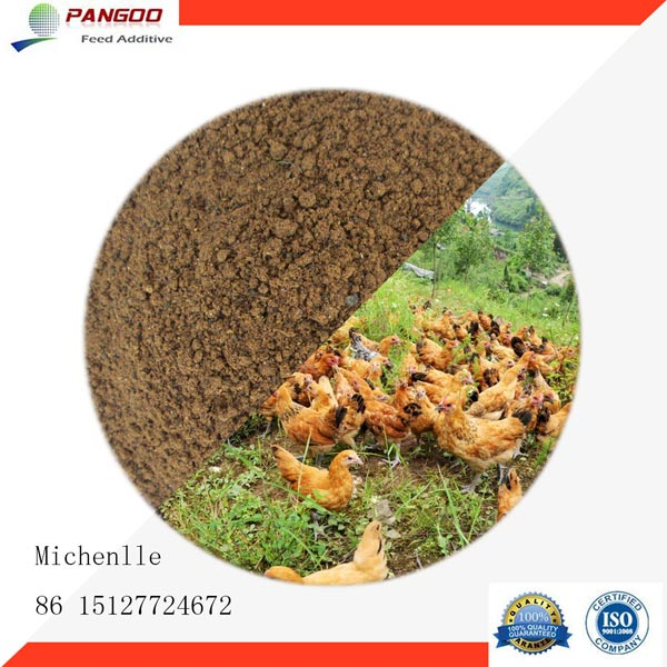 Fish meal manufacturer in china by pangoo international for Fish meal for sale