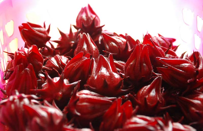 Products - Roselle Flower Manufacturer inDUBAI United Arab ...