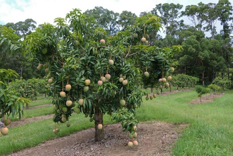 Products - mango Manufacturer inAhmednagar Maharashtra ...