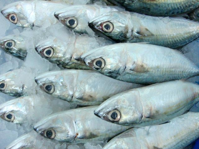 Products buy frozen indian mackerel fish from angel sea for Best way to freeze fish