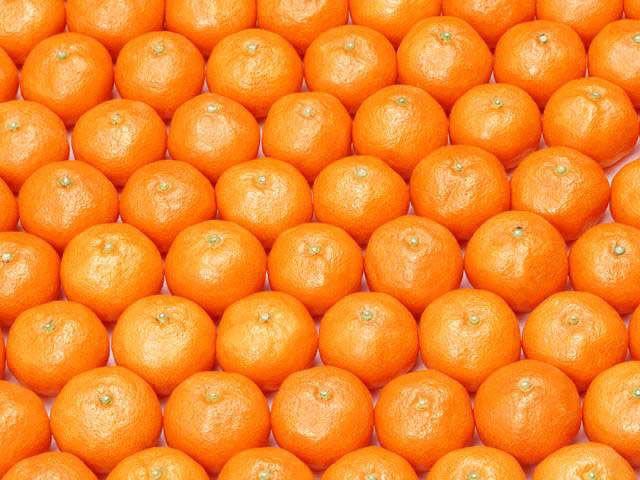 Buy Fresh Mandarin Orange from Al Ajm Trading Co. Llc, United Arab ...