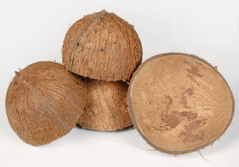 cocconut production Edappal: kerala, popular for coconut, is facing a severe shortage of coconuts due to the fall in production according to agriculture officials, deficient rain and summer affected coconut production in the state.