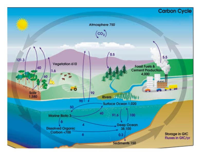 Oxygen Cycle In Nature Products - Carbon Cycl...