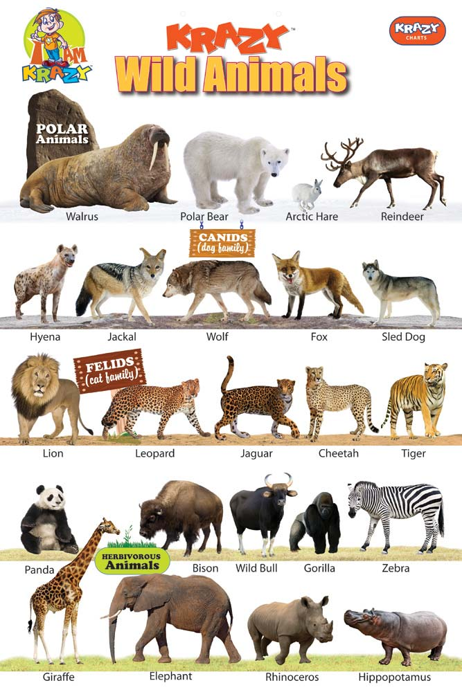 Pics For > Wild Animals Chart With Names