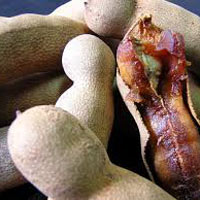 Tamarind - Manufacturer, Exporters and Wholesale Suppliers,  Assam - Kay Dee Cold Storage Pvt. Ltd.
