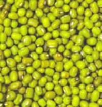 Green Mung Lentil