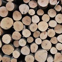 Red Oak Wood Logs