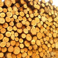 Yellow Pine Wood Logs