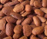 Pongamia Oil Seeds