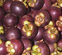 Garcinia Mangosteen Extract 40%