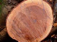 Bubiga Wood