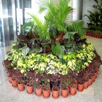 Indoor Plants Maintenance Services