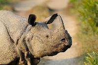 Kaziranga Tour Package 3 Nights / 4 Days