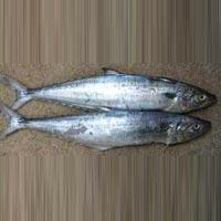 Frozen Seer Fish
