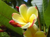 Exotic Plants