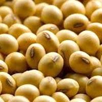 Soybean Seeds
