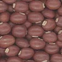 Red Bean Seeds