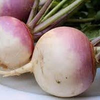 Fresh Turnip