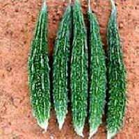 Hybrid Vegetable Seeds