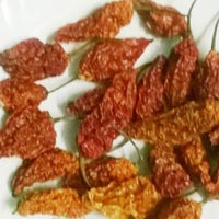 Dried Bhut Jolokia Chilli