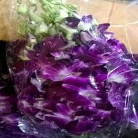Dendorium Orchid Flowers