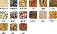Orgainc Seeds