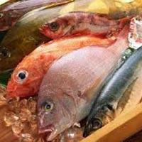 Frozen Fish Meat