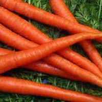 Fresh Carrot