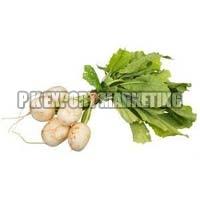 Fresh Turnip