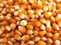 Pure Yellow Maize