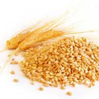Wheat - Wholesale Suppliers,  Delhi - Sheryas Export Import