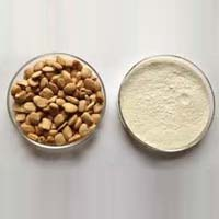 White Tamarind Kernel Powder