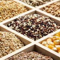 Agricultural Seeds