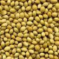 Indian Coriander Seeds Whole