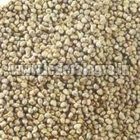 C Grade Millet Seeds