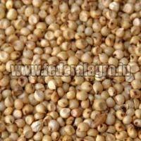 B Grade Sorghum Seeds