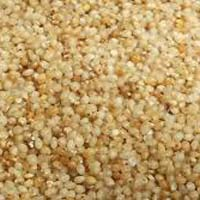 Little Millet Seeds