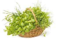 Ayurvedic Plant