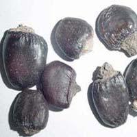 Semecarpus Anacardium Oil