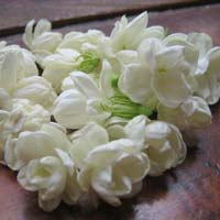 Fresh Jasmin Flowers