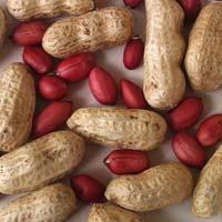Red Skin Peanut