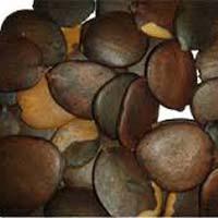 Opkorum Herbal Seed
