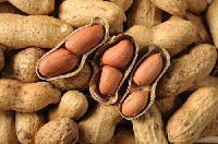 Groundnut Inshell