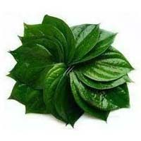 Fresh Green Betel Leaves