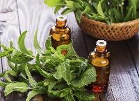 Natural Mint Oil