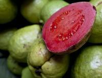 Fruits Seeds