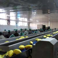 SS Vegetables & Fruits Handling Conveyor